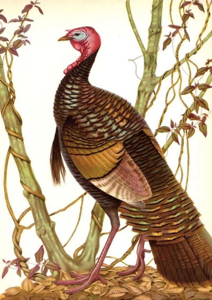 1950's Wild Turkey Rye